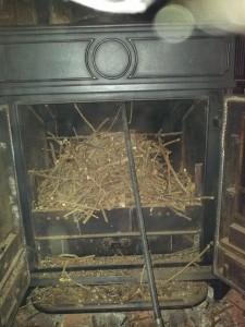 Birds nest Toot Hill. 1